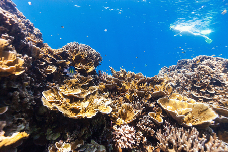 Underwater photo of woman snorkeling and free diving in a clear tropical water at coral reef in Palau