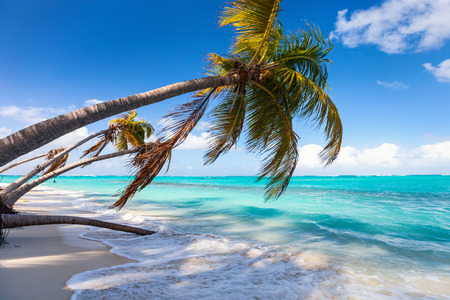 Beautiful beach framed with palms on Caribbean island of Anguilla Stock Photo