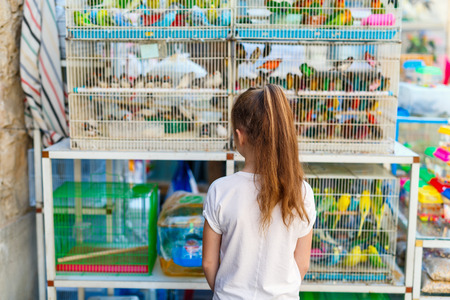 Little girl looking at birds in cages for sale at Birds market in Souq Waqif Doha, popular tourist destination.