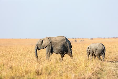 ケニアアフリカのサファリパークでゾウの母親と赤ちゃん 写真素材