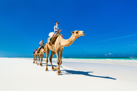 Family mother and kids riding camels at  tropical white sand beach 写真素材