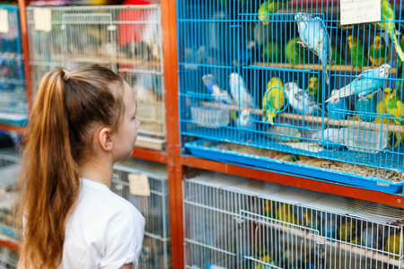 Little girl looking at birds in cages for sale at Birds market in Souq Waqif Doha, popular tourist destination. 스톡 콘텐츠 - 102213557