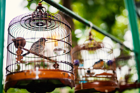 Birds in cages for sale at Birds market, Kowloon Hong Kong, popular tourist destination. Stock Photo