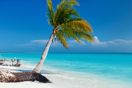 Perfect tropical white sand beach with coconut palm Фото со стока