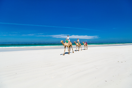 Family mother and kids riding camels at  tropical white sand beach Stock Photo