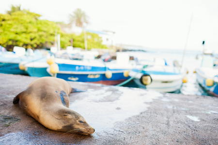 Sea lion sleeping in town near port at Galapagos Santa Cruz island Stock Photo - 104506067