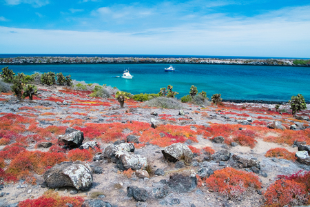 固有の多肉植物のセスヴィアの草で覆われたガラパゴスサウスプラザ島の美しい風景 写真素材 - 104506105