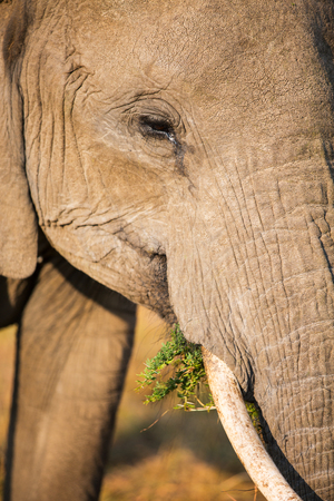 Close up of elephant in safari park