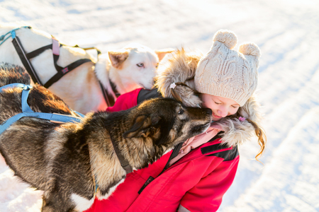 Adorable girl having a cuddle with husky sled dog in a farm in Northern Norway Stok Fotoğraf