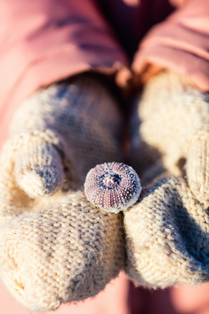 Close up of a little girl holding frozen sea shells in her hands