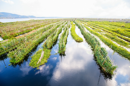 Landscape view of floating gardens on Inle lake in Myanmar
