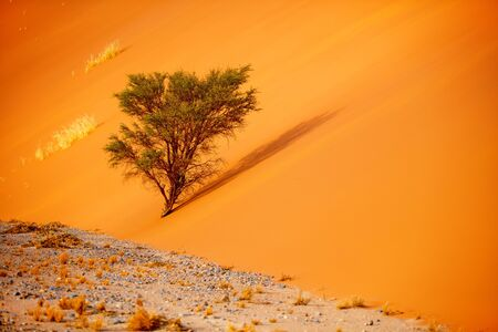Close up of beautiful red sand dune in Sossusvlei in Namibia 스톡 콘텐츠