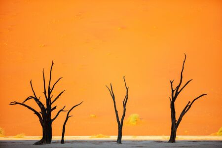 Dead camelthorn trees against red dunes early in the morning in Deadvlei Namibia