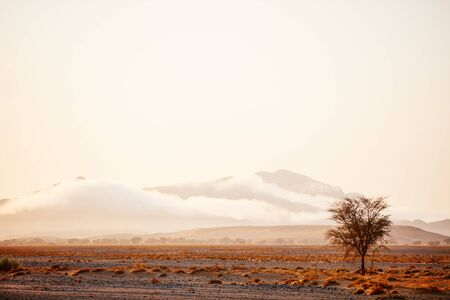 Beautiful landscape of Namib desert at sunrise 写真素材