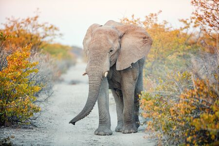Close up of elephant in safari park
