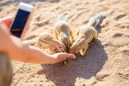 Close up of little girl taking photo of ground squirrels while feeding them