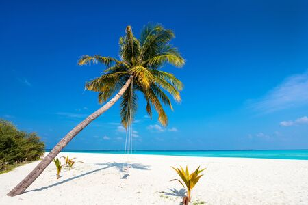Perfect tropical white sand beach with coconut palms