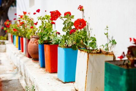 Row of colorful flower pots outdoors Stockfoto