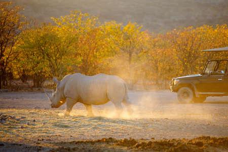 White rhino in a beautiful sunset light in Namibia park Zdjęcie Seryjne