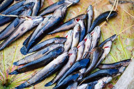 Fresh fish at seafood market