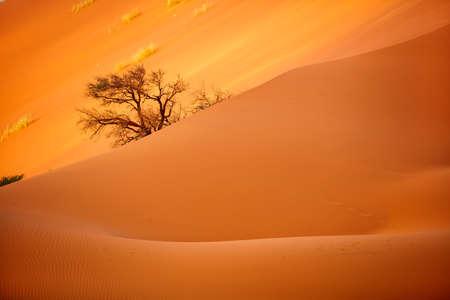 Close up of beautiful red sand dune in Sossusvlei in Namibia Zdjęcie Seryjne
