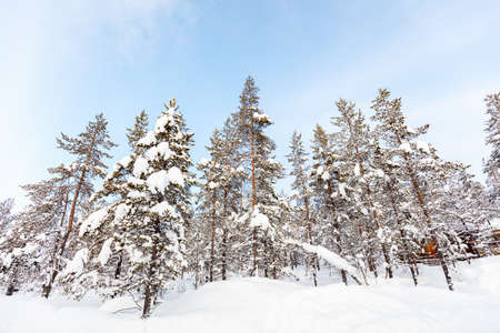 Beautiful winter landscape of forest with snow covered trees 写真素材 - 155235541
