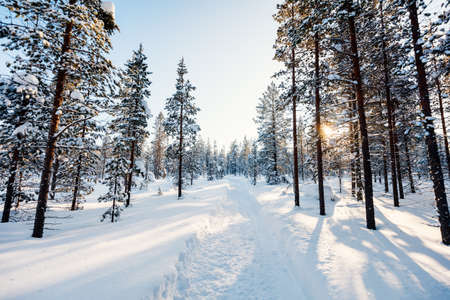Beautiful winter landscape of forest with snow covered trees 写真素材 - 155235590