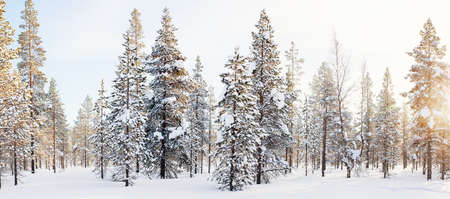 Beautiful winter landscape of forest with snow covered trees Zdjęcie Seryjne - 155367370