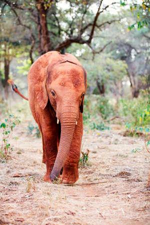 Wild baby elephant in safari park