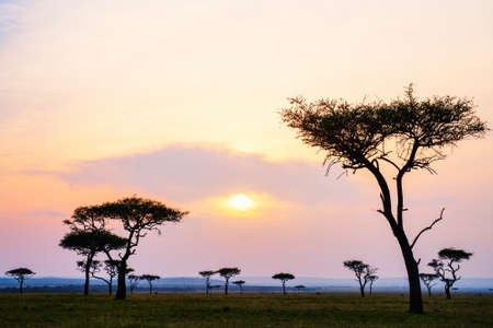 Beautiful landscape of Masai Mara at sunset Zdjęcie Seryjne - 155367395