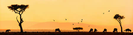 Silhouettes of wild animals and acacia tree on sunrise in Masai Mara national park, Kenya