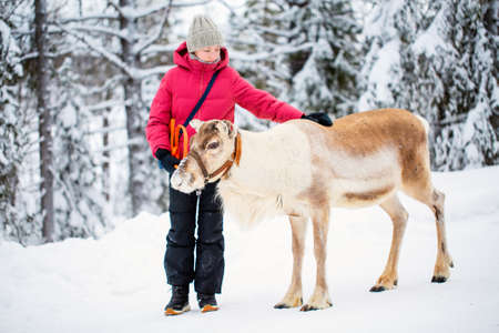 Adorable pre-teen girl walking with reindeer in winter forest in Lapland Finland Zdjęcie Seryjne