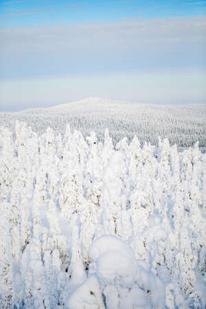 Majestic winter landscape with snow covered trees in Lapland Finland Zdjęcie Seryjne