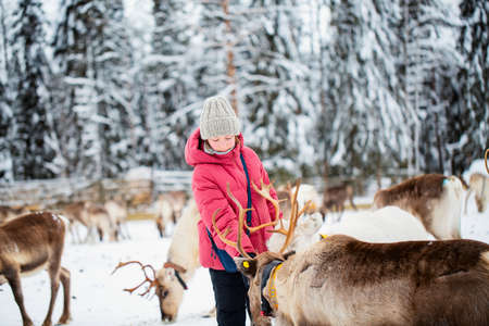 Cute pre-teen girl outdoors feeding reindeers on farm on sunny winter day in Lapland Finland Zdjęcie Seryjne