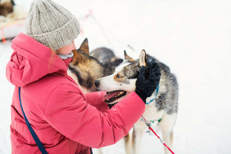 Adorable pre-teen girl cuddling with husky dogs outdoors on winter day in Lapland Finland