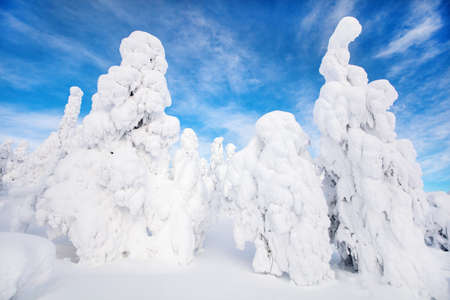 Majestic winter landscape with snow covered trees in Lapland Finland 免版税图像