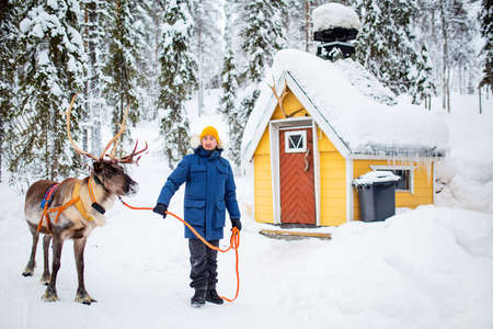 Young man walking with reindeer in winter forest in Lapland Finland 免版税图像