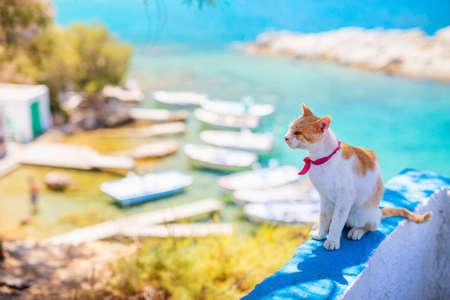 Red and white cat sitting outdoors overlooking Mandrakia fishing village on Milos island in Greece 免版税图像