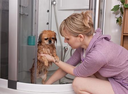 cabine de douche: La jeune fille se lave un chien p�kinois dans une cabine de douche Banque d'images