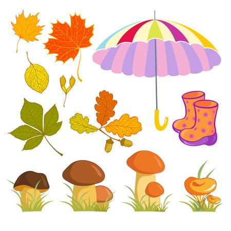 Autumn leaves: chestnut, oak, maple, alder. Edible mushrooms, Umbrella, rubber boots