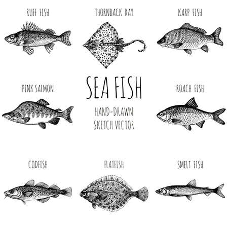 Smelt. Sea fish. Hand-drawn sketch vector. Vintage style. Fish and seafood products. Vecteurs