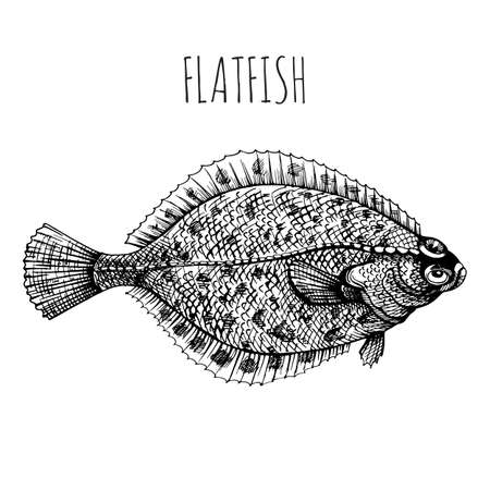 Flounder, flatfish, plaice. Sea fish. Hand-drawn sketch vector. Vintage style. Fish and seafood products