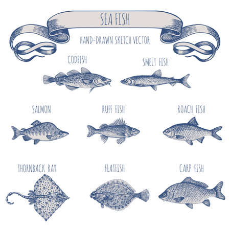 Smelt. Sea fish. Hand-drawn sketch vector. Vintage style. Fish and seafood products. Ilustracja