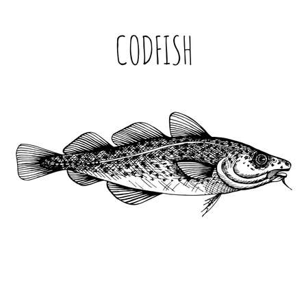 Sea fish. Hand-drawn sketch vector. Vintage style. Fish and seafood products