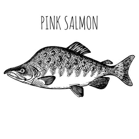 Sea fish. Hand-drawn sketch vector. Vintage style. Fish and seafood products Ilustração Vetorial