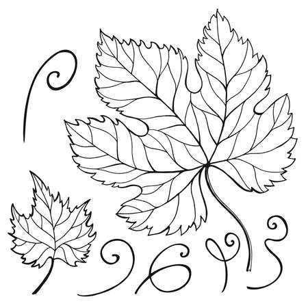 Hand drawn doodle illustration for adult coloring books in vector. Unique lacy. Floral doodles for your design.