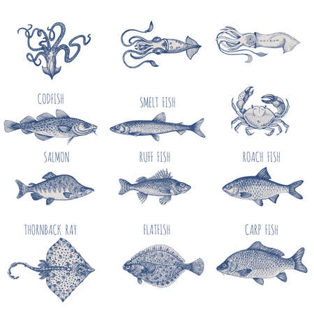 Sea fish. Hand-drawn sketch vector. Vintage style. Fish and seafood products.