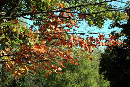 tree in fall leaves Stock Photo - 2629744