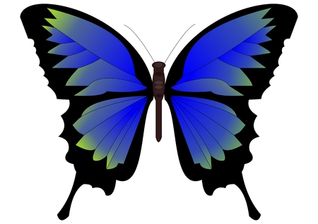 bluegreen: Single butterfly in blue-green design on white background Illustration