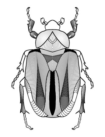 etymology: Calligraphic beetle drawing in black and white. Beetle shape decorated with graphic elements.